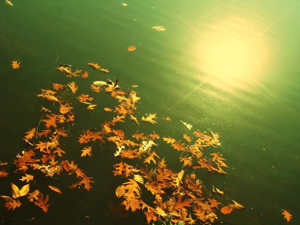 Fall by melissa cottrell