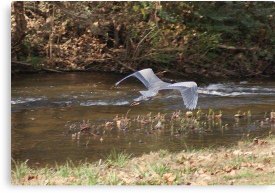 Heron in Flight by Rick  Friedle