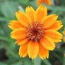 wundervolle orange Blume, Ringelblume, Natur von rhnaturestyles