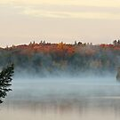 Misty Morning  by Heather King