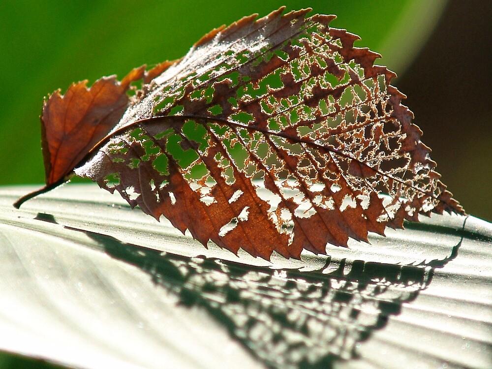 Lacey Leaf by bsfgadv
