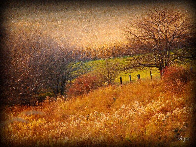 Of Golden Grasses by vigor