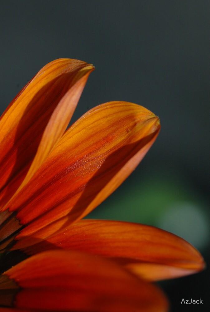 Orange Flower by AzJack