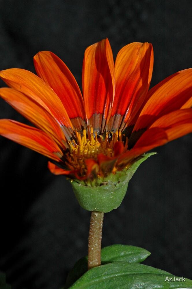 Orange Flower 2 by AzJack