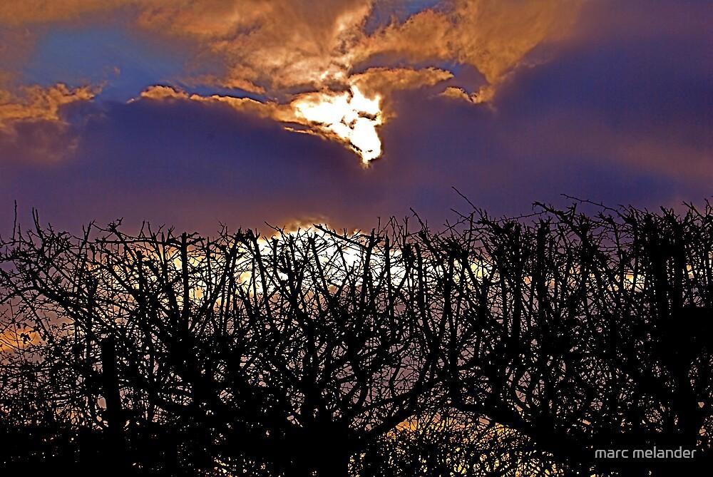 Sunset thorns by marc melander