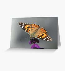 Painted Lady, Vanessa cardui Greeting Card