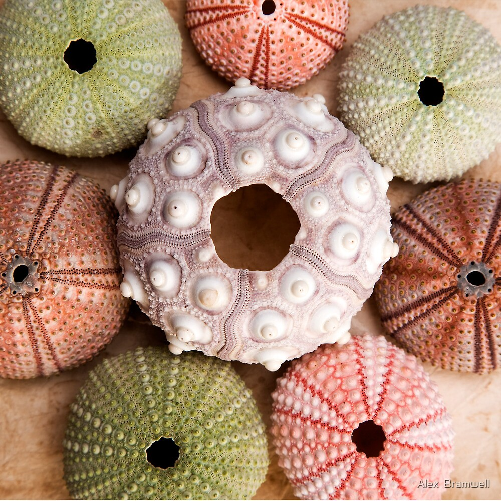 Urchin Square by Alex  Bramwell