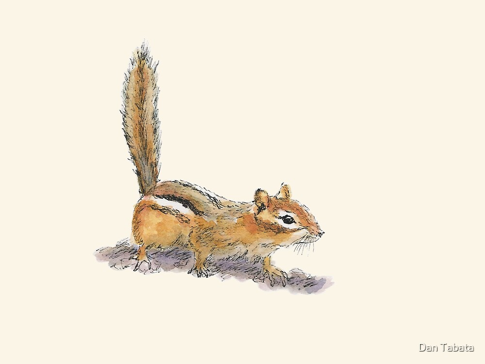 Curious Chipmunk by Dan Tabata