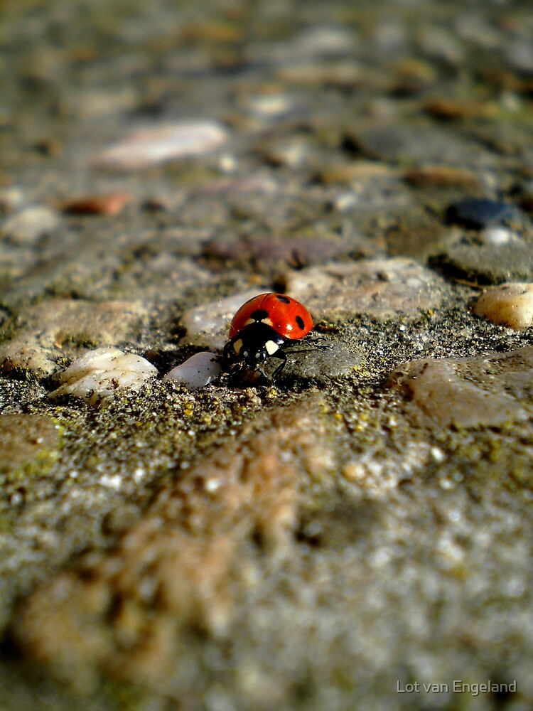 Ladybird  by Lot van Engeland