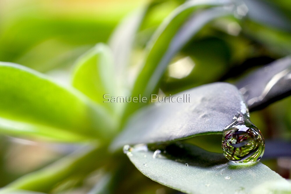 Raindrop on a leaf by Samuele Puricelli