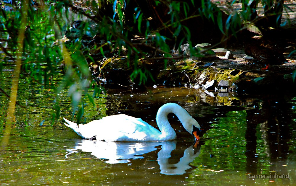 Swan Princess by camerainhand