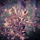 Autumn Leaves by Asiantiger247