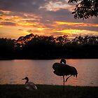 Sandhills silhouette at sunset by Zina Stromberg