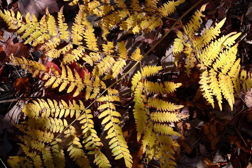 Autumn Fern 4073 by Doug Wilkening