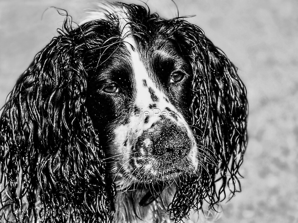 Wet & Sandy Poppy by Susie Peek