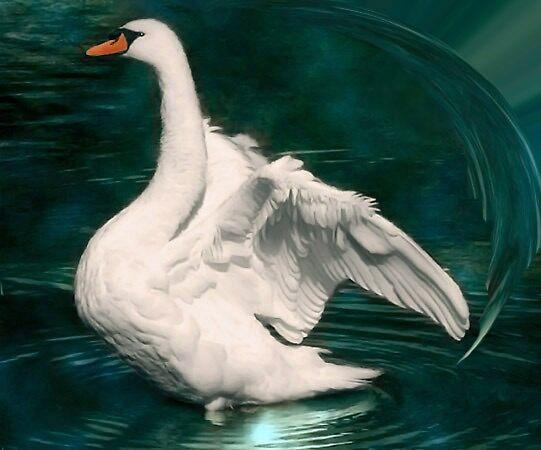 Pond Splender by Anna Godwin