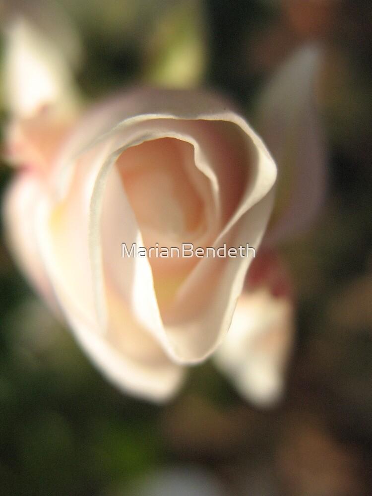 Dreamy Rose by MarianBendeth