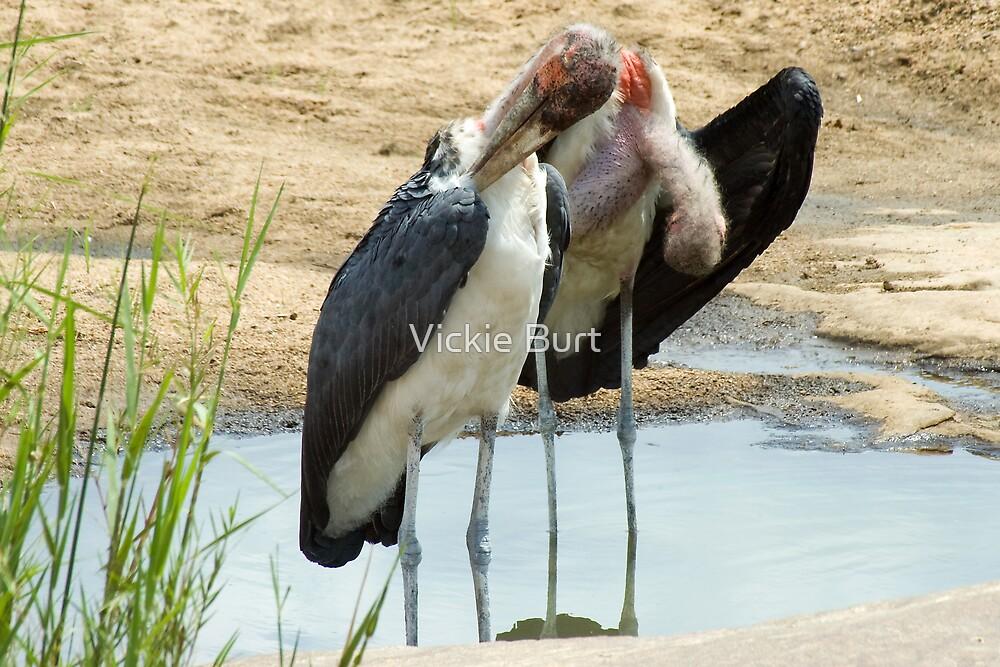 Maribou Stork Cleanup by Vickie Burt