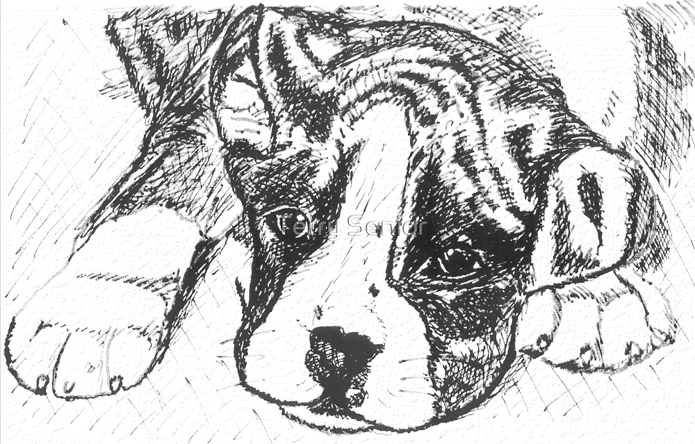 Pedigree Boxer Dog Line Drawing by Terry Senior