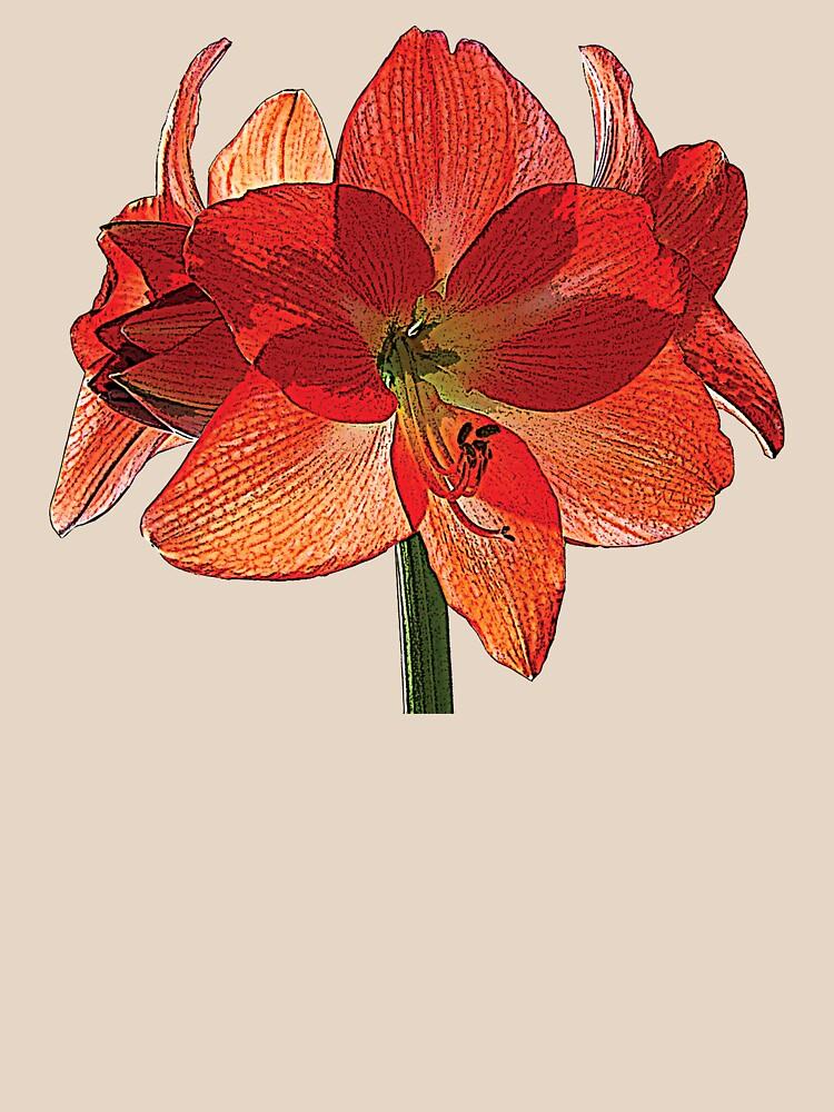 Orange Hippeastrum Amaryllis by SudaP0408
