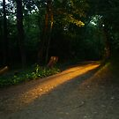 The Path by estrica