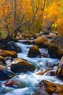 Bishop Creek Fall Colors South Fork by photosbyflood