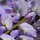 Marching Wisteria Flowers by Joy Watson