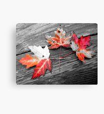 Selective Leaves Canvas Print