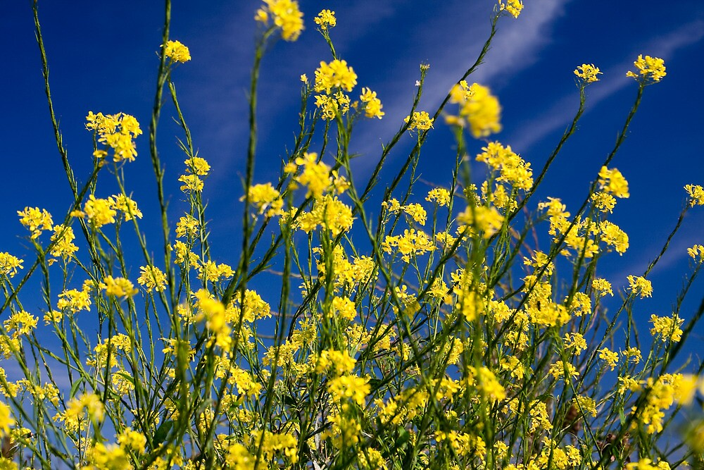 Flowers in the sky by Mike Smith