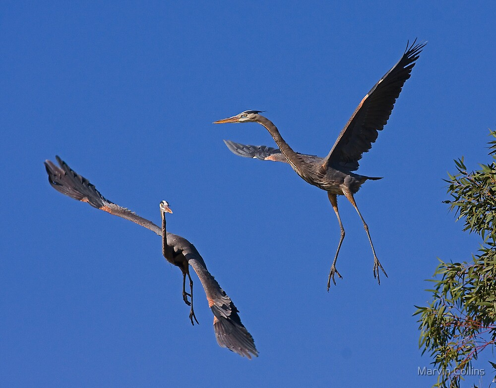 Near Mid-Air Collision by Marvin Collins