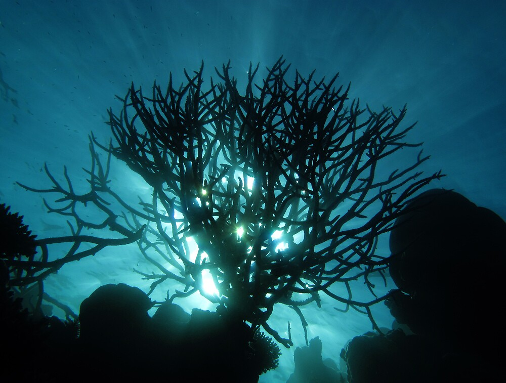 Staghorn Silhouette II by Reef Ecoimages