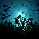 Chromis Silhouette by Reef Ecoimages