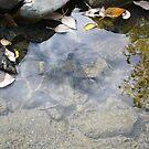 rocks and leaves in the pond by Istvan Hernadi