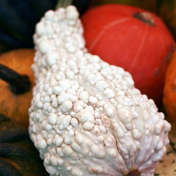 Fall Garden White Warty Gourd by patjila