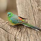 Grass Parrot 01 by Werner Padarin