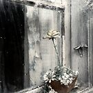18.10.2018: Unfading Flowers by Petri Volanen