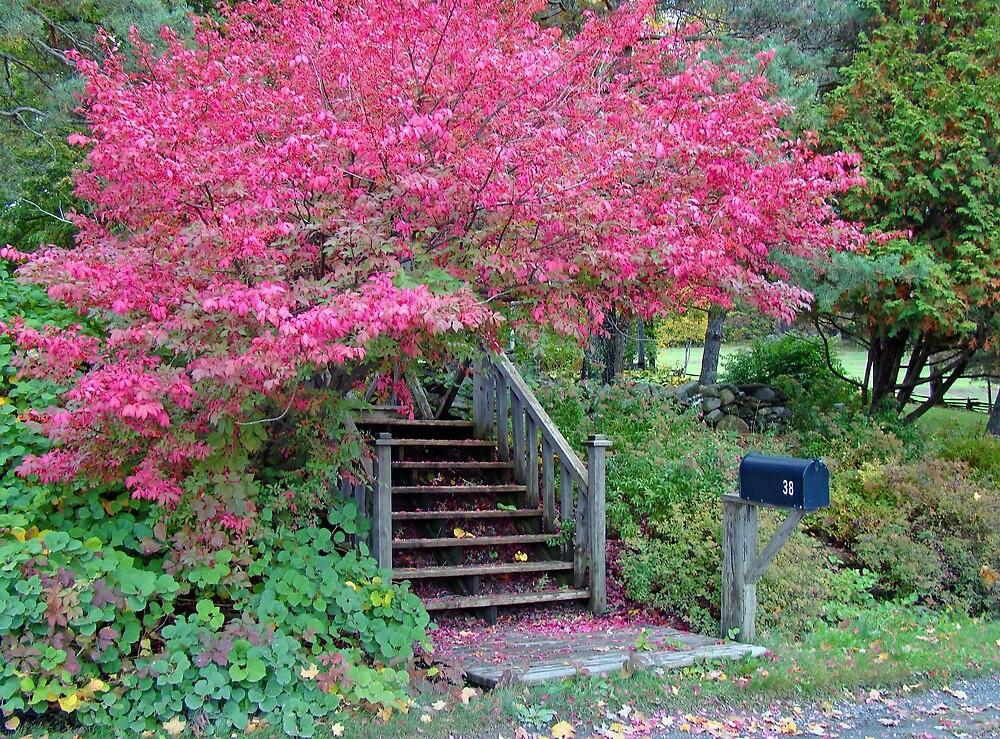 Pink Autumn by marchello