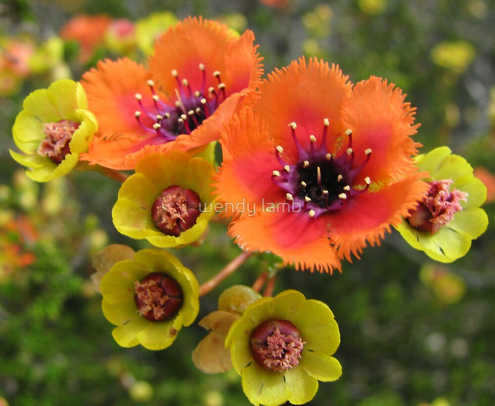 luminous orange flowers by wendy lamb