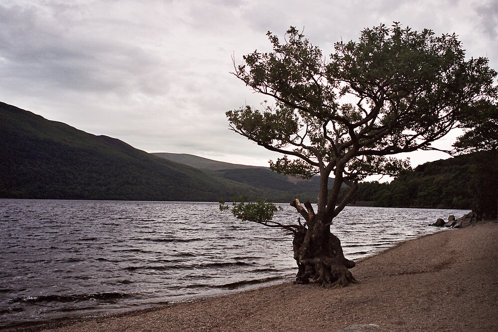 Keeping watch at Loch Lomond by Jesse Cain