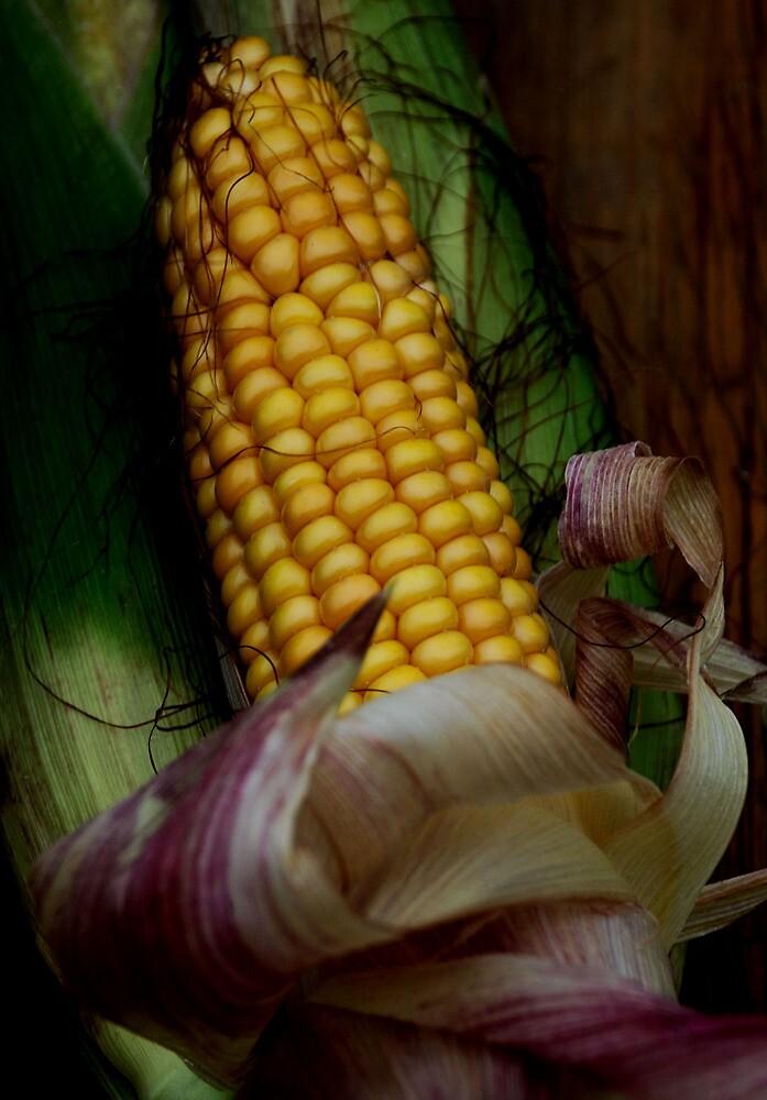 harvest by Heike Nagel