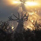 Dawn roar by Junkyardmax