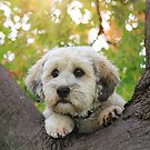 Puppy in a Tree by Annette Blattman