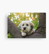Puppy in a Tree Canvas Print