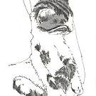 FRED GREY TABBY KITTEN HELD by dkatiepowellart