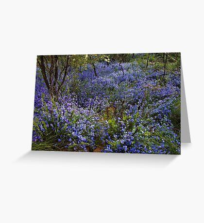 Blue Lechenaultia - Growing wild, Wongan Hills, Western Australia Greeting Card