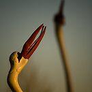 Storks - Eastern Beach Geelong by Jack Jansen