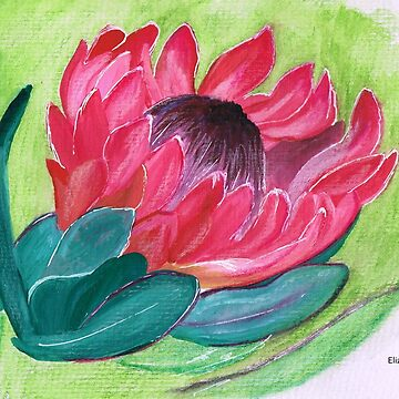 Sylvia Protea by Happyart