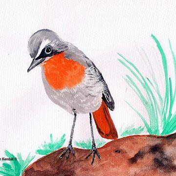Cape robin-chat / Janfrederik by Happyart