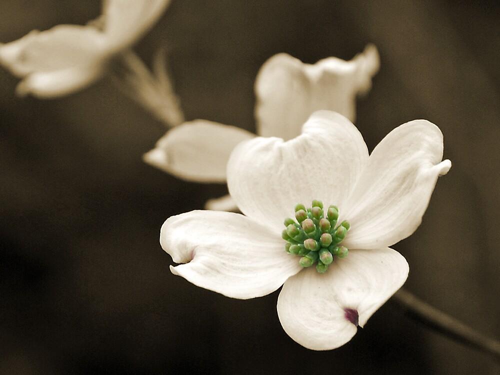 Kentucky Flower by bburgs