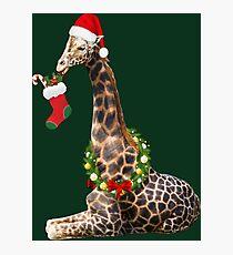 Christmas  Giraffe  Photographic Print